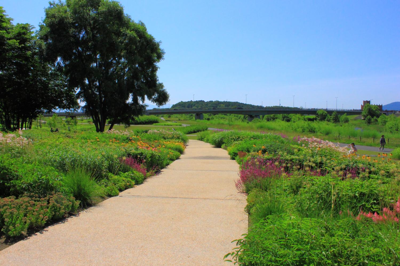 駅裏の庭IMG_5446